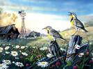 SunsOut Casse-tête 1000 Oiseaux sur la clôture de la ferme abandonnée (Meadow Outpost) SunsOut 71131 796780711310