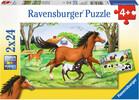 Ravensburger Casse-tête 24x2 Monde de chevaux 4005556088829