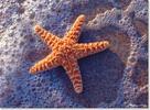 Melissa & Doug Casse-tête 300 étoile de mer sur la plage au soleil Melissa & Doug 8991 000772089913