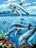 Royal & Langnickel Peinture à numéro junior dauphins 22.5x29.5cm 090672993731