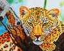 Diamond Dotz Broderie diamant Regard du léopard (Leopard Look) Diamond Dotz (Diamond Painting, peinture diamant) 4897073240817
