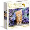 Clementoni Casse-tête 500 Ginger Cat (Chat Roux) Boite carré 8005125959778