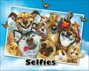 Diamond Dotz Broderie diamant Chiens et animaux de compagnies (Selfies: Love You!) Diamond Dotz (Diamond Painting, peinture diamant) 4897073242439