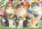 Jumbo Casse-tête 500 la famille de chats 8710126183250