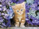 Clementoni Casse-tête 500 Ginger cat in flowers / Chaton dans les fleurs 8005125304158