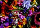 Heye Casse-tête 1000 A. Makoto - fleurs aux couleurs vives 4001689297398