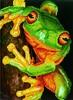Diamond Dotz Broderie diamant Grenouille arboricole (Green Tree Frog) Diamond Dotz (Diamond Painting, peinture diamant) 4897073249391
