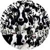 SunsOut Casse-tête 1000 silhouette Troupeau de vaches, rond (Herd of Cows) SunsOut 35102 796780351028
