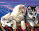 Sequin Peinture à numéro Peinture à numéro senior chiens Huskies 5013634010364