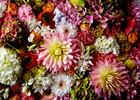 Heye Casse-tête 1000 A. Makoto - fleurs Dahlia 4001689297404