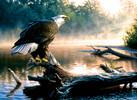SunsOut Casse-tête 1000 Pygargue à tête blanche qui repère la rivière, aigle (Scouting the River) SunsOut 62349 796780623491